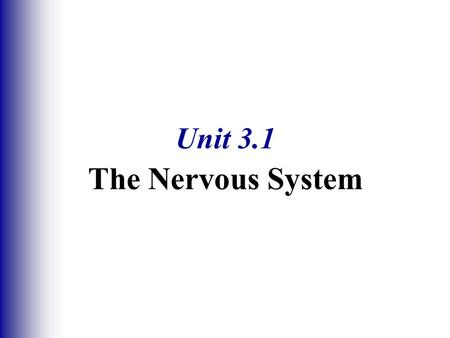Unit 3.1 The Nervous System. Regions of the Brain  Cerebral hemispheres  Diencephalon  Brain stem  Cerebellum.
