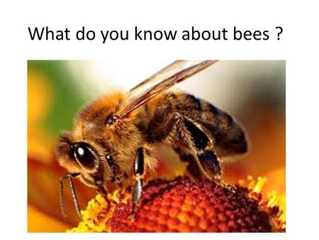 What do you know about bees ?. The beekeeper nad his hives.