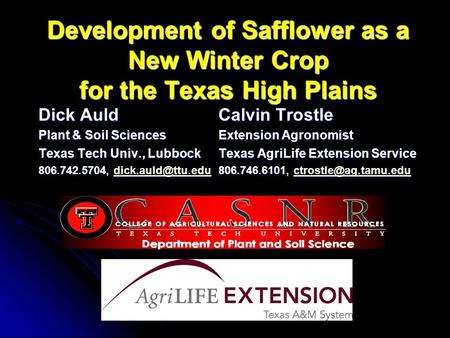 Development of Safflower as a New Winter Crop for the Texas High Plains Dick AuldCalvin Trostle Plant & Soil SciencesExtension Agronomist Texas Tech Univ.,