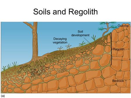 Soils and Regolith. Pedology- The study of soils Pedogenic processes depend on: ClORPTH –Climate - Temperature, H 2 O, freezing –Organisms - Addition.