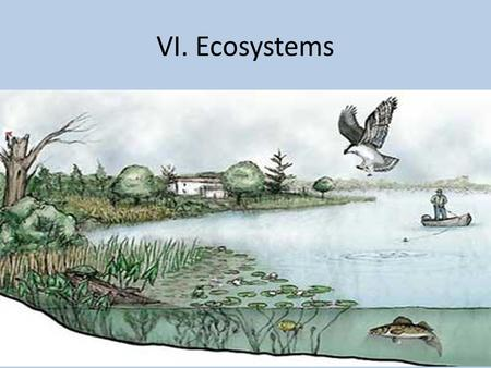 VI. Ecosystems. Ecosystem – a group of plants and animals that depend on each other and their environment for survival. They can be very large or extremely.