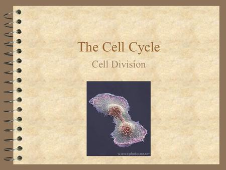 The Cell Cycle Cell Division Onion Cells Cell Division A cell must divide to: Grow Reproduce Repair damaged tissues.