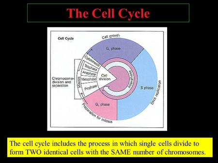 The Cell Cycle The cell cycle includes the process in which single cells divide to form TWO identical cells with the SAME number of chromosomes.