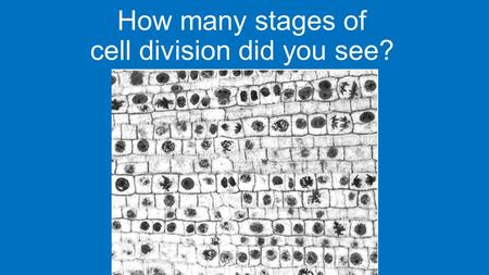 How many stages of cell division did you see?