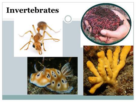 Invertebrates. Kingdom Animalia Characteristics Review 1. What were the 5 characteristics of Animalia? 2. Name the 3 body layers and state what human.