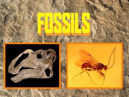 What is a fossil? Fossils give clues about organisms that lived long ago. They help to show that evolution has occurred. They also provide evidence about.