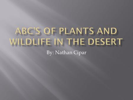 ABC'S of Plants and Wildlife in the Desert