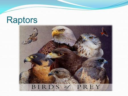 Raptors Raptors or birds of prey as they are more commonly know, are the largest birds. The largest Raptor in Europe is the Golden Eagle, which can be.