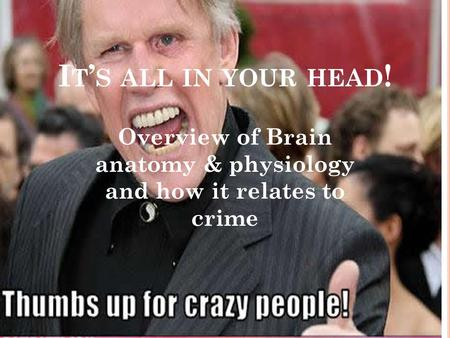 I T ' S ALL IN YOUR HEAD ! Overview of Brain anatomy & physiology and how it relates to crime.