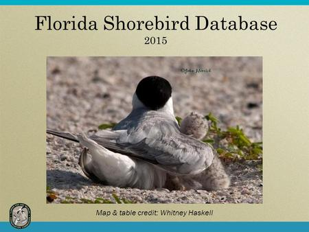 Florida Shorebird Database 2015 Map & table credit: Whitney Haskell.