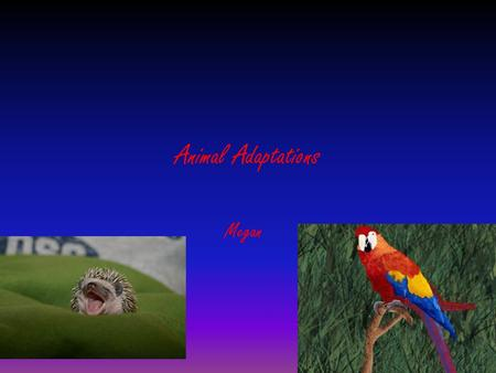Animal Adaptations Megan.