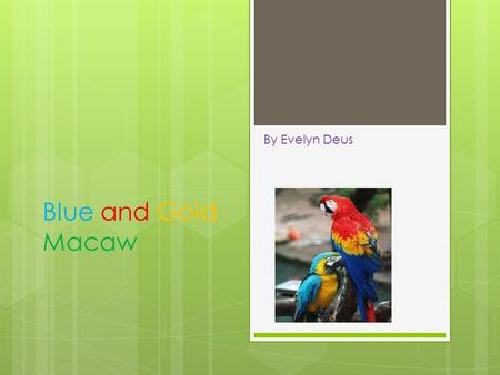 Blue and Gold Macaw By Evelyn Deus  Blue and gold macaw is a bird.  The baby macaw is called a chick. The Name of My Animal.