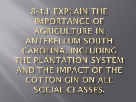 8-4.1 Explain the importance of agriculture in antebellum South Carolina, including the plantation system and the impact of the cotton gin on all social.