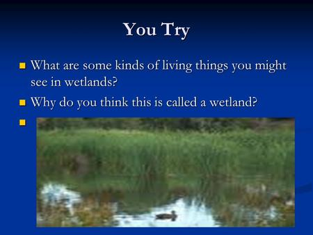 You Try What are some kinds of living things you might see in wetlands? What are some kinds of living things you might see in wetlands? Why do you think.
