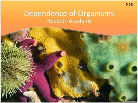 Dependence of Organisms Houston Academy 5.9B. Ecosystem An ecosystem is an area where living things interact with nonliving things and each other. Living.