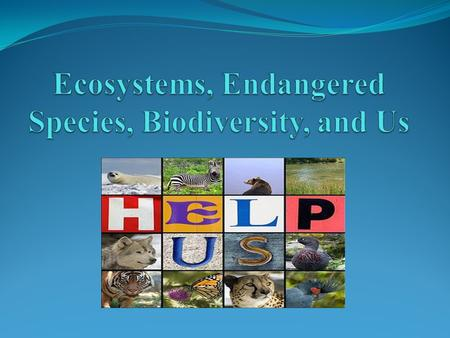 Questions What is an ecosystem? What is biodiversity? Why is it important? Should we focus on the preservation of endangered species and not the species.