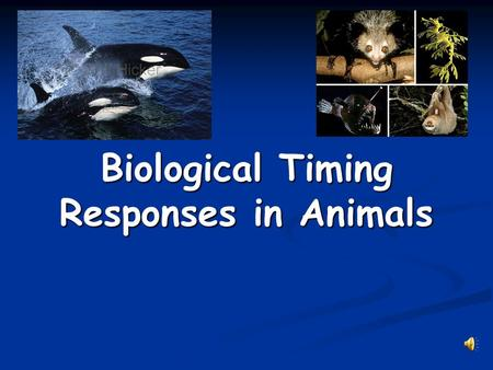 Biological Timing Responses in Animals