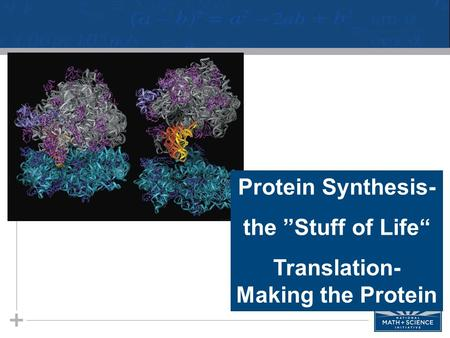 "Protein Synthesis- the ""Stuff of Life"" Translation- Making the Protein."