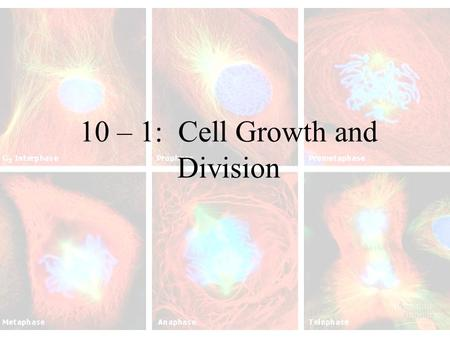 10 – 1: Cell Growth and Division. How do living things grow? Grow by producing more cells. (Cells do not increase in size) –A human adult has about 10.