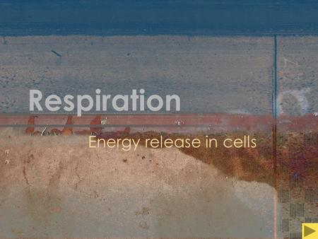 Respiration Energy release in cells. Respiration Energy release in cells NOT Gas exchange OR Breathing.