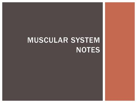 MUSCULAR SYSTEM NOTES.  Byproduct is lactic acid  Occurs when muscle cells have used all the oxygen available to them (muscles bulge during intense.