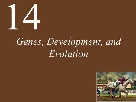 Genes, Development, <strong>and</strong> Evolution 14. Chapter 14 Genes, Development, <strong>and</strong> Evolution Key Concepts 14.1 Development Involves Distinct but Overlapping Processes.