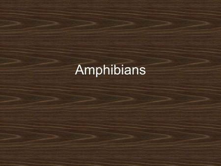 Amphibians. Amphibian Characteristics Vertebrates (backbone) Ectothermic (cold-blooded) –Must absorb heat from external sources –When environment becomes.