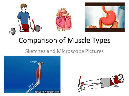 Comparison of Muscle Types Sketches and Microscope Pictures.