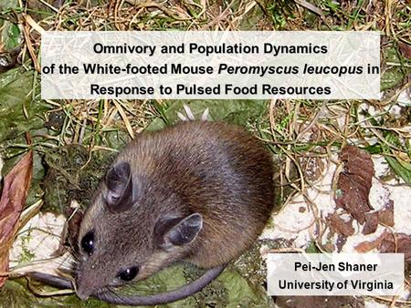 Omnivory and Population Dynamics of the White-footed Mouse Peromyscus leucopus in Response to Pulsed Food Resources Pei-Jen Shaner University of Virginia.