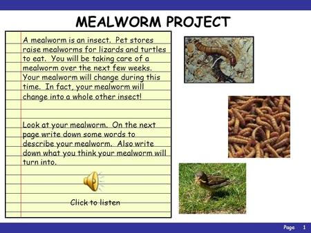 Page1 MEALWORM PROJECT A mealworm is an insect. Pet stores raise mealworms for lizards and turtles to eat. You will be taking care of a mealworm over.