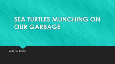 SEA TURTLES MUNCHING ON OUR GARBAGE By Xavier Barajas.
