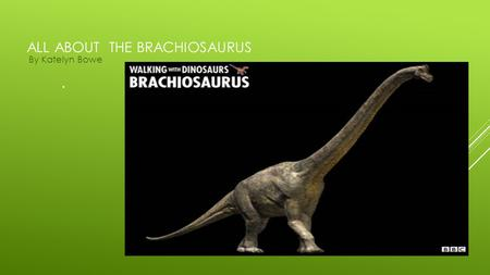 "ALL ABOUT THE BRACHIOSAURUS By Katelyn Bowe. "" "" BRACHIOSAURUS THE BRACHIOSAURUS LIVED IN THE JURASSIC PERIOD THEY LIVED OVER 150 MILLION YEARS AGO."