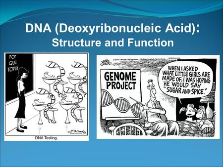 DNA (Deoxyribonucleic Acid) : Structure and Function.