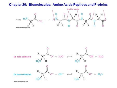Chapter 26: Biomolecules: Amino Acids Peptides and Proteins.