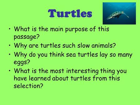 Turtles What is the main purpose of this passage? Why are turtles such slow animals? Why do you think sea turtles lay so many eggs? What is the most interesting.