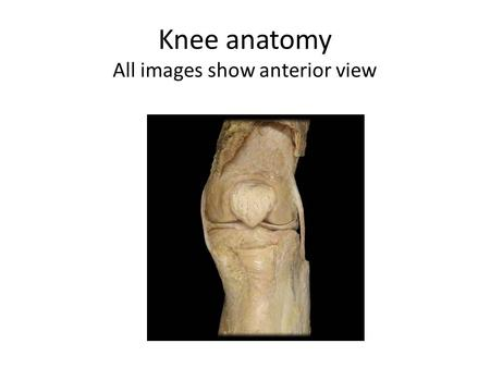 Knee anatomy All images show anterior view