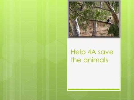 Help 4A save the animals. Birds live in trees Birds build their nests in trees.