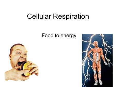 "Cellular Respiration Food to energy. Autotrophs –""Self-feeders"" –Plants and other organisms that make all their own organic matter from inorganic nutrients."