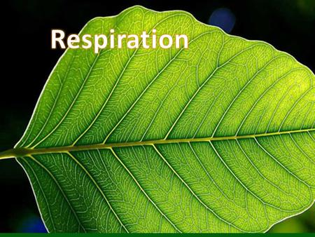 TitleDate Respirationsept. 23 Input: Output: What goes in. What comes out.