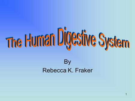 1 By Rebecca K. Fraker 2 Introduction The digestive system is used for breaking down food into nutrients which then pass into the circulatory system.
