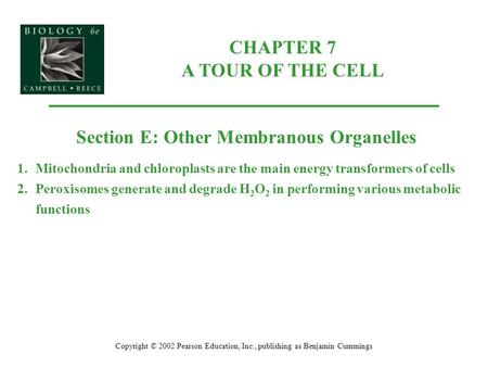 CHAPTER 7 A TOUR OF THE CELL Copyright © 2002 Pearson Education, Inc., publishing as Benjamin Cummings Section E: Other Membranous Organelles 1.Mitochondria.
