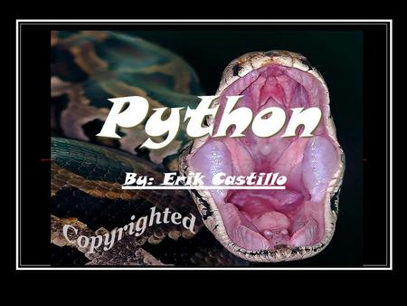 Python By: Erik Castillo. Adaptation A snake's main adaptation to life is its very form. With no legs, arms, ears and other appendages, it can slither.