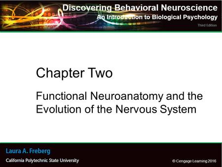 Functional Neuroanatomy and the Evolution of the Nervous System