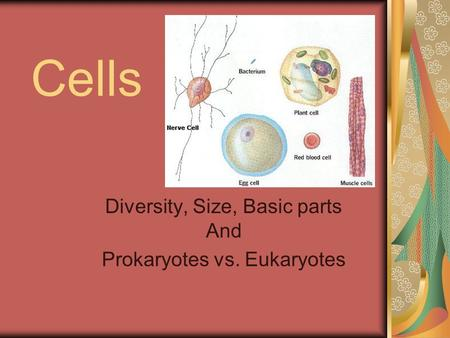 Cells Diversity, Size, Basic parts And Prokaryotes vs. Eukaryotes.