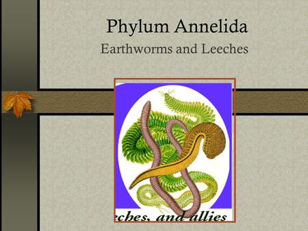 Phylum Annelida Earthworms and Leeches. About 9,000 species!