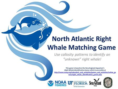 "North Atlantic Right Whale Matching Game Use callosity patterns to identify an ""unknown"" right whale! This game is based on the New England Aquarium's."