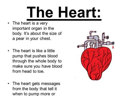 The Heart: The heart is a very important organ in the body. It's about the size of a pear in your chest. The heart is like a little pump that pushes blood.
