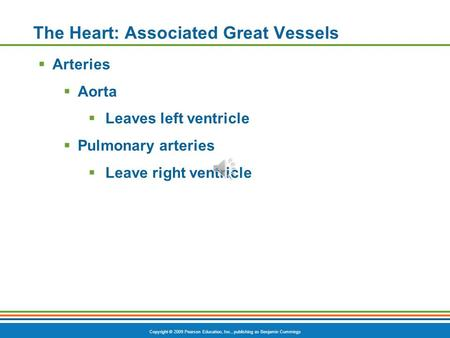 Copyright © 2009 Pearson Education, Inc., publishing as Benjamin Cummings The Heart: Associated Great Vessels  Arteries  Aorta  Leaves left ventricle.