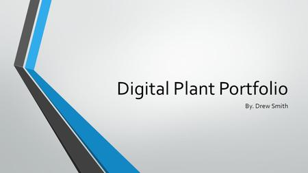 Digital Plant Portfolio By. Drew Smith. Setaria pumila Yellow Foxtail.