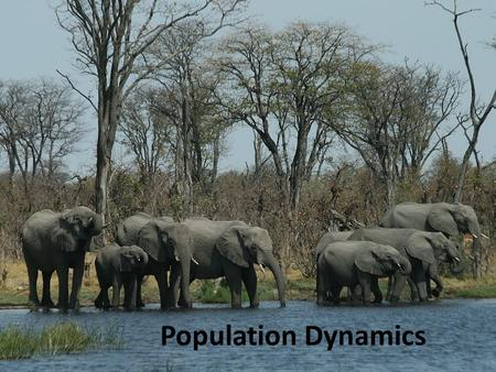 Population Dynamics. Populations are dynamic Size Density Age distribution Dispersion (spatial pattern) These changes (population dynamics) occur in response.